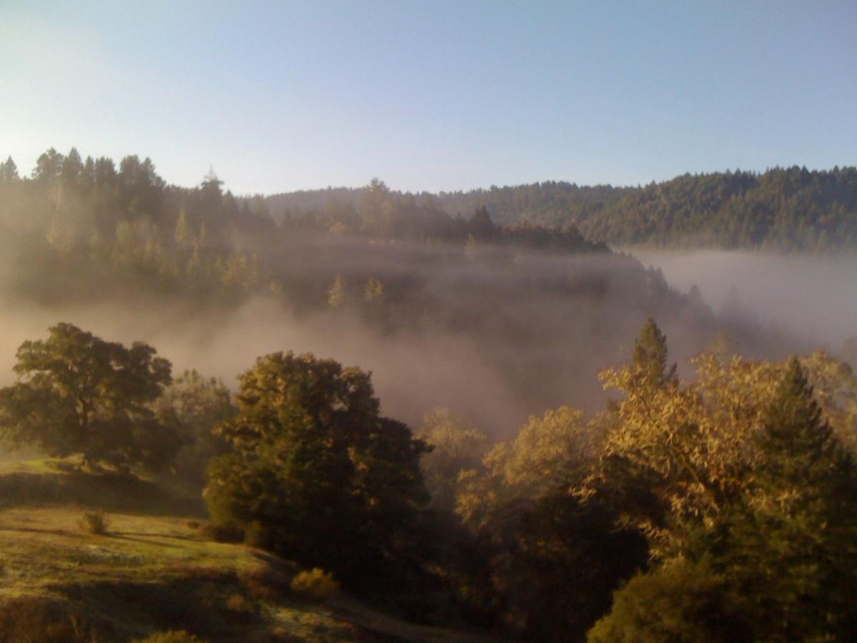 Bohemia fog
